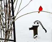 Red Cardinal in the snow on top of an old iron water pump. Stock Photo