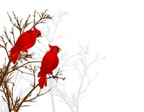Red Cardinals Sitting In Tree Stock Photos