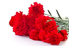 Red carnation Royalty Free Stock Image