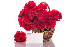Free Red Carnation Stock Photo - 30984250