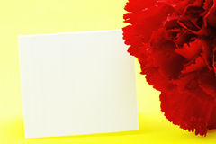Red Carnation Against Yellow Background Stock Image