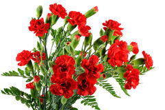 Red carnation bouquet Stock Photos