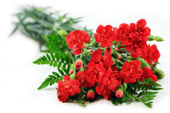 Red carnation bouquet. Isolated on white background Royalty Free Stock Photo
