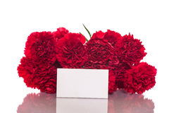 Red carnation