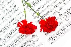 Red carnation flower Stock Image