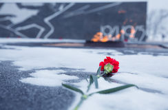 Red carnation flower assigned to eternal flame. Blurred backgrou Stock Photos