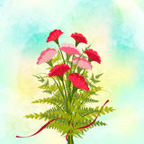 Red Carnation Flower Background Stock Photo