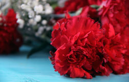 Red Carnation Flower. Red Carnation Concept and Decoration stock images