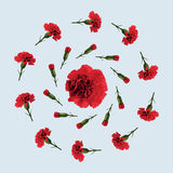 Red carnation flower. Pattern of red carnations on a blue background Stock Photography