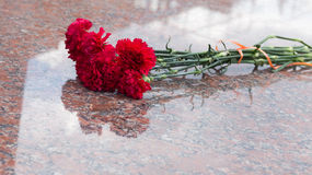 Red carnation flowers on a granite stone Stock Photos