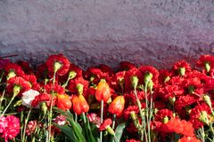 Red carnation flowers at the memorial to fallen soldiers in the world war II royalty free stock photo