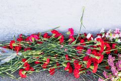 Red carnation flowers at the memorial to fallen soldiers in the world war II royalty free stock photos