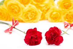 Red carnation flowers Royalty Free Stock Photo