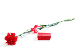 Red carnation with gift box. Red carnation with red gift box, white background Stock Photography