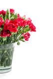 Red carnation in glass vase Stock Photography