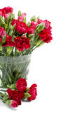 Red carnation in glass vase Royalty Free Stock Photography