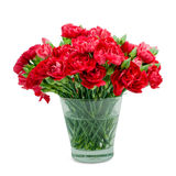 Red carnation in glass vase Royalty Free Stock Image