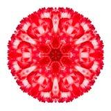 Red Carnation Mandala Flower Kaleidoscopic Isolated on White. Background stock photography