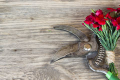 Red carnation over wooden table Stock Photos