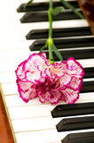 red carnation on piano keys Stock Photo