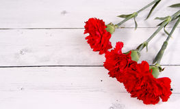 Red carnation space card Royalty Free Stock Images
