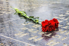 Red Carnation on the tombstone Stock Photos