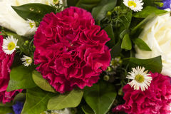 Red carnation and white aster bouquet Stock Photos