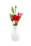 Red carnation in white vase Stock Photo