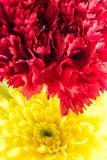 Red carnation and yellow chrysanthemum in the flower bouquet. Vivid color of red carnation and yellow chrysanthemum in the flower bouquet Royalty Free Stock Image