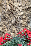 Red carnations on the background of a granite slab. Royalty Free Stock Images