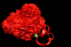 Red Carnations Isolated on Black Stock Photography