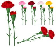 Red carnations isolated on white Stock Photo