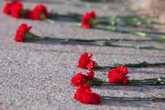 Red carnations lie on granite slab of monument Stock Image