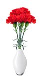 Red carnations in vase isolated on white Stock Photos