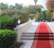 Red carpet function or reception. Red carpet with gold fringe leading into a formal function bordered by a manicured garden with decorated hedge, plants and Royalty Free Stock Image