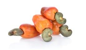 Red cashew fruit isolated on white background.  stock image