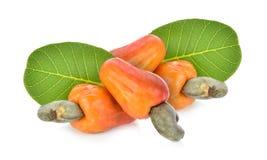 Red cashew fruit isolated on white background.  royalty free stock photo