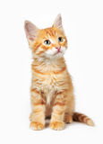 Red cat. On a white background stock photo