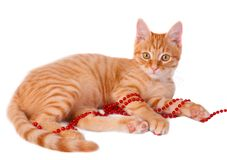 Red cat. With beads lying on white background Royalty Free Stock Photography