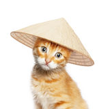Red cat in asian conical hat Royalty Free Stock Photos
