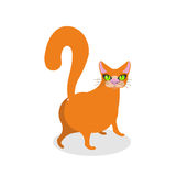 Red cat ass. Happy pet. Thick Animal back Stock Photos
