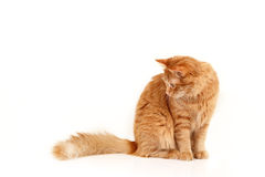 Red cat Stock Images