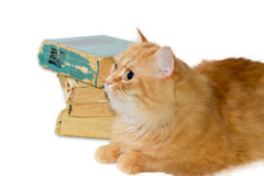 Red cat on background of a stack of old books Royalty Free Stock Photo