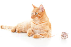 Red cat with a ball of yarn Stock Photography