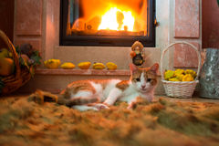 Red cat is basking by the fireplace in the cozy room. Burning fire Royalty Free Stock Images