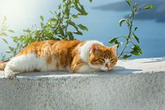 Red cat basking in the sun Royalty Free Stock Images