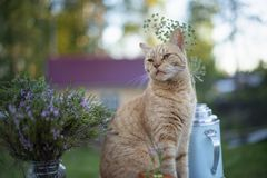 Cat sits near flowers in the street stock images