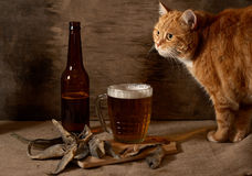 The red Cat , beer and fish Stock Photo