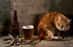 The red Cat , beer and fish Stock Photography