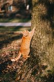 Red cat beneath an old tree Royalty Free Stock Photo